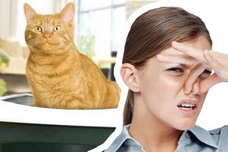 Запах мочи домашних животных в Березниках