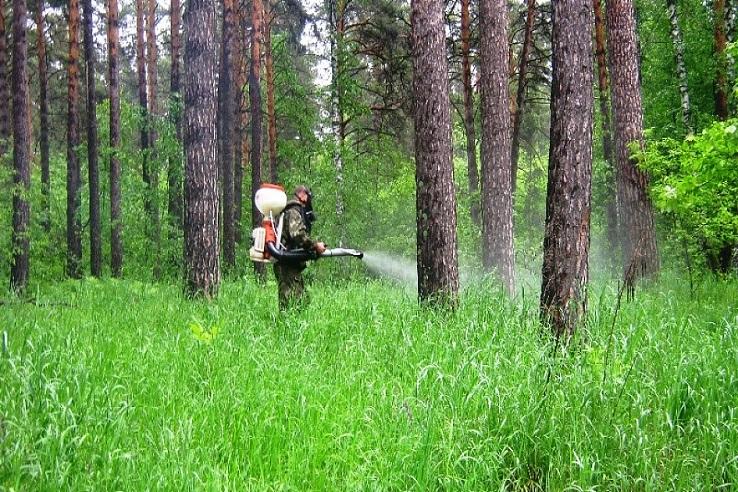 Обработка от клещей лесных массивов в Березниках